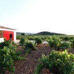 Cerrogallina, excelencia en vinos de Utiel-Requena